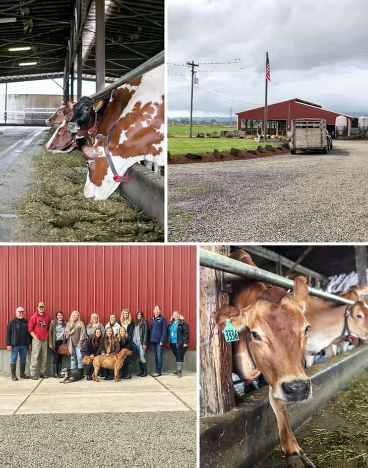 Tillamook Dairy Farm Collage