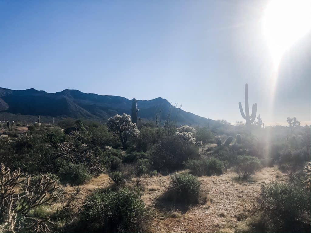 Usery Mountain Regional Park hike