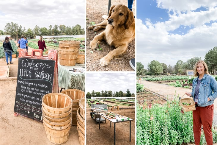 Forage with the Farmer at Schnepf Farms