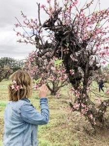 smelling peach blossoms